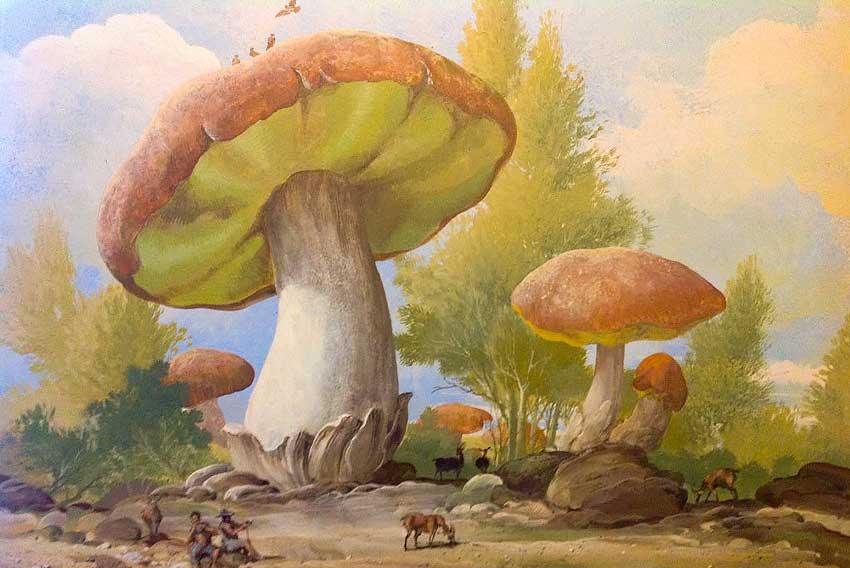I funghi di Johann
