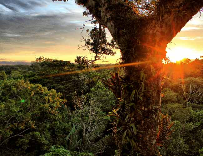 Parco Nazionale Yasunì, in Ecuador.