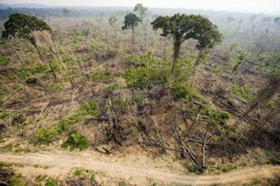 Deforestazione.