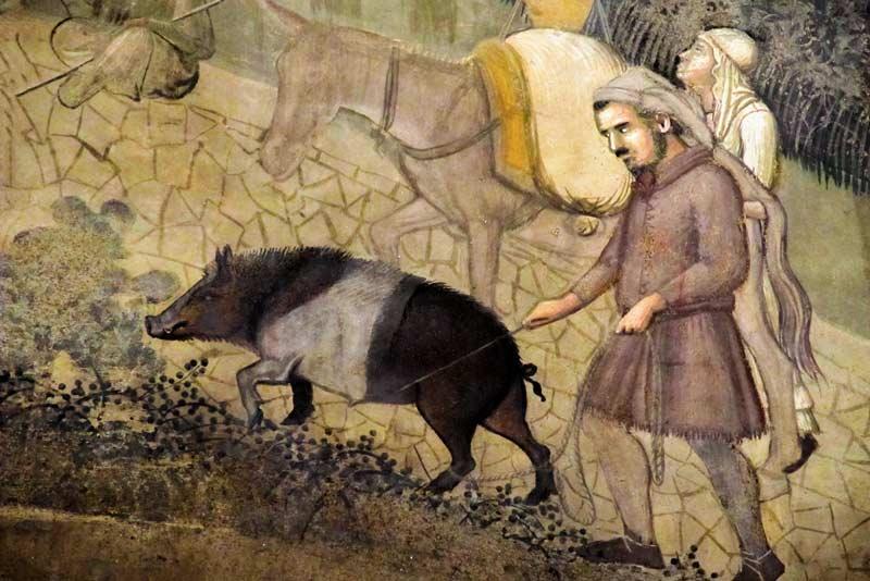 Animali nel medioevo: Ambrogio Lorenzetti, Gli effetti del Buon Governo, Sala dei Nove, Palazzo Pubblico, Siena