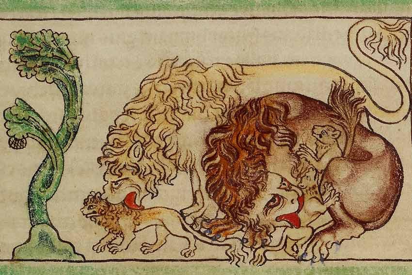 Miniatura dal Bestiario di Northumberland, 1250-1260, opera di un miniatore sconosciuto.