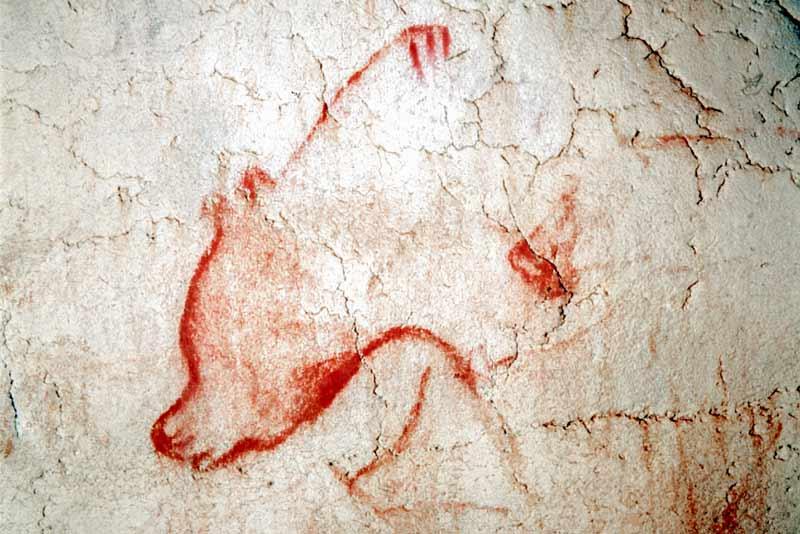 Orso dipinto nella grotta di Chauvet