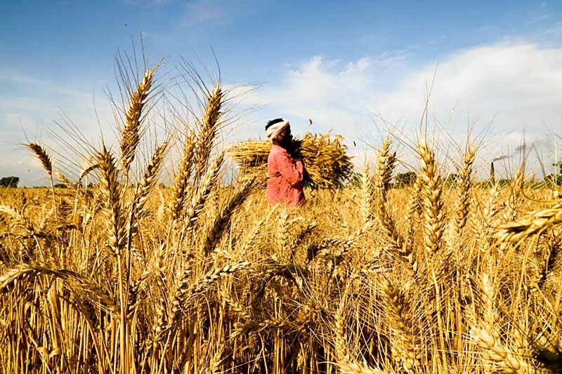 braccianti agricoltura
